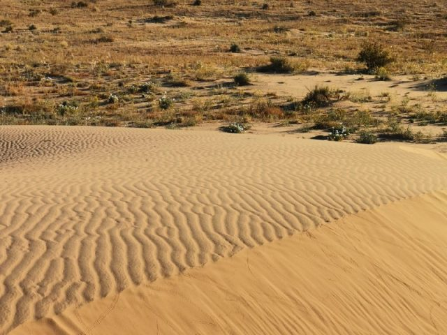 Beautiful Mexico sand dunes III